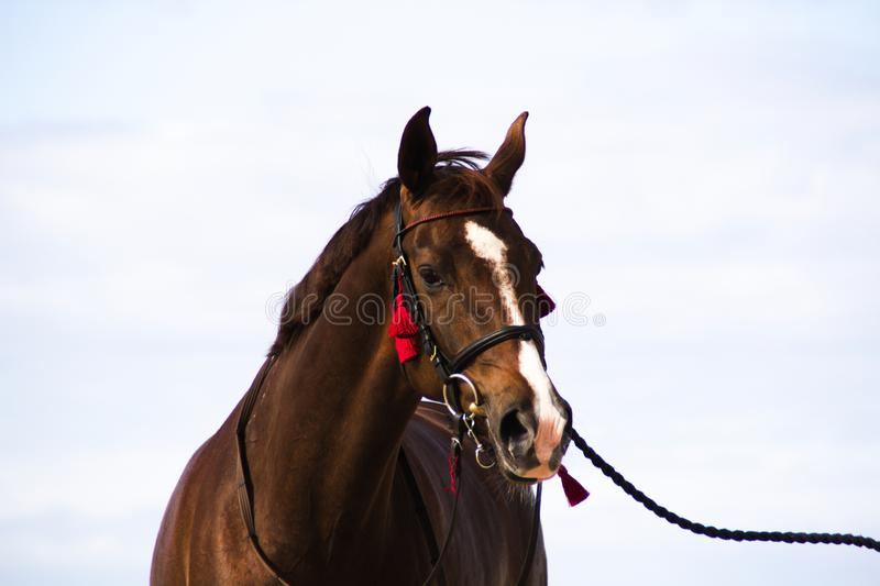 Horse on blurred background stock photos