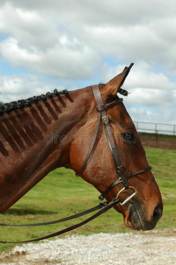 Horse With Braids Free Stock Photo