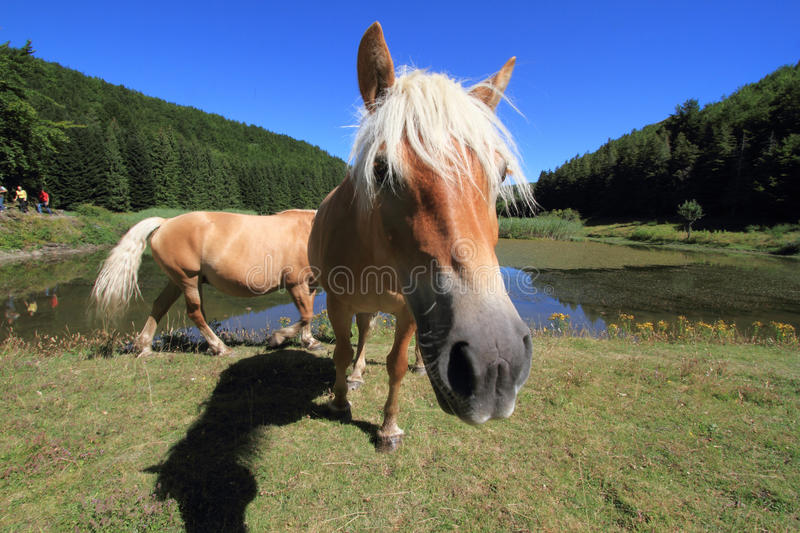 Horse breeders equestrian sport stock photos