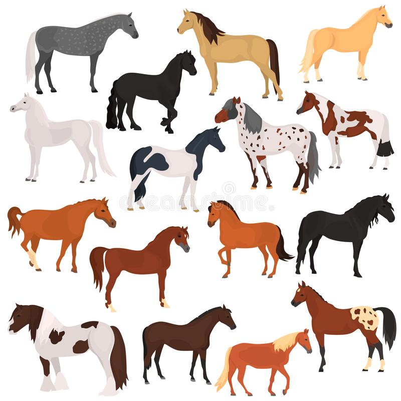 Horse breeds color flat icons set. For web and mobile design vector illustration