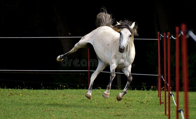 Horse, Bridle, Horse Like Mammal, Stallion Free Public Domain Cc0 Image