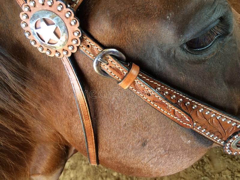 Horse and bridle stock image