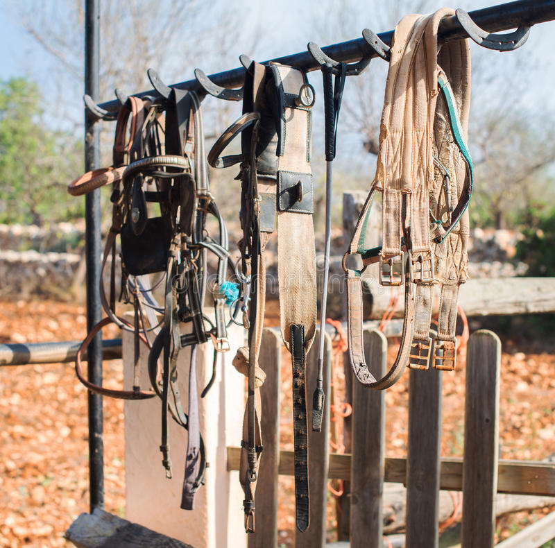 Horse bridles. stock photo