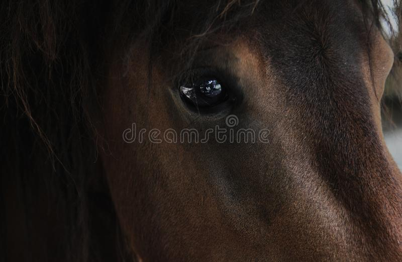 Horse brown eye close up animal. Portrait photo stock photography
