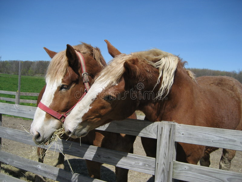 Horse Buddies royalty free stock images