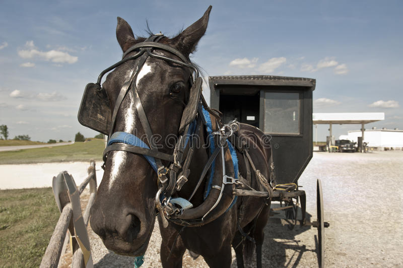 Horse and buggy stock photo