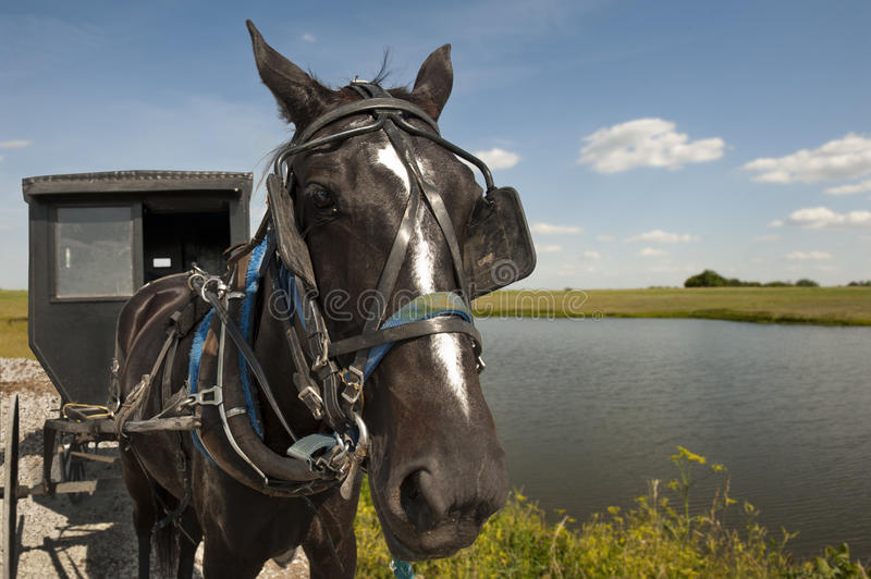 Download Horse and buggy stock image. Image of station, sunny - 25250431