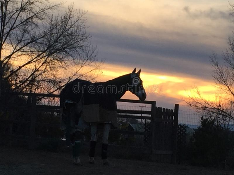 Horse bundled up in blankets on a cold winter night with sunset. Windy winter evening on the central coast of California, Paso Robles wine country in San Luis stock photography