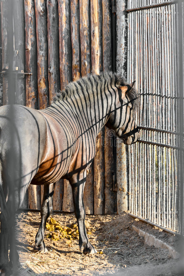 Download Horse in a cage stock photo. Image of equestrian, nature - 21557064