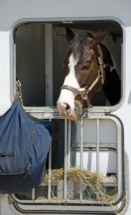 Free Horse Can T Get To The Hay Stock Photos - 13641043