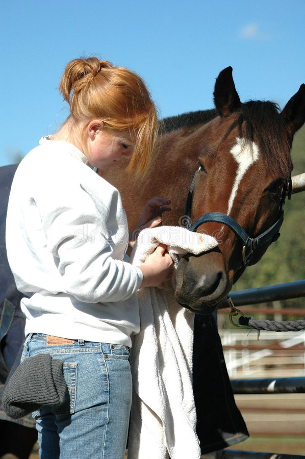 Horse care royalty free stock image