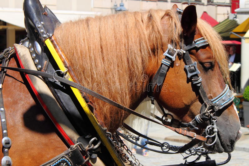 Horse and carriage royalty free stock image