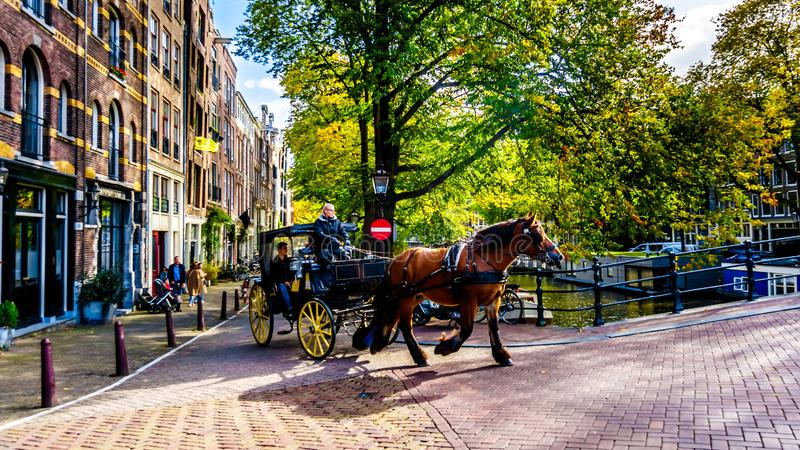 Horse and Carriage in Amsterdam in the Netherlands royalty free stock image