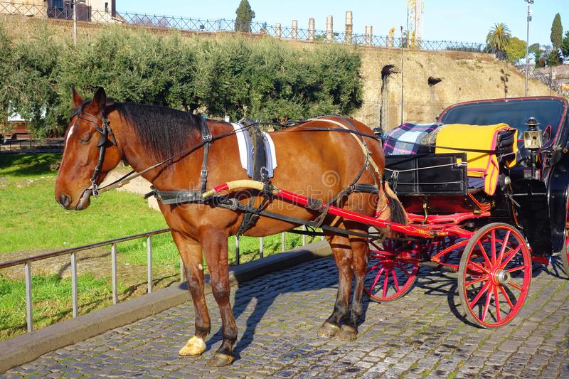 Horse and carriage at Colosseum Rome Italy stock images