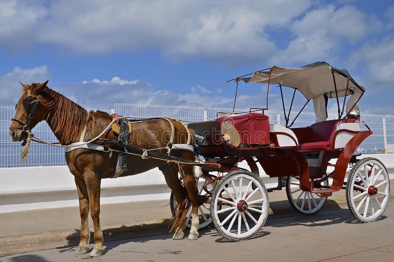 Horse and carriage in Cozumel royalty free stock photography
