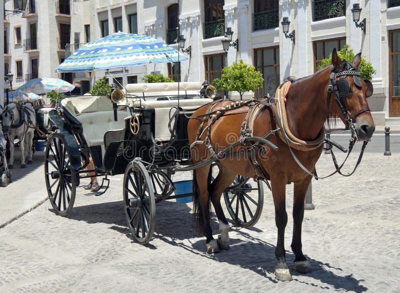 Horse And Carriage For Hire Royalty Free Stock Images