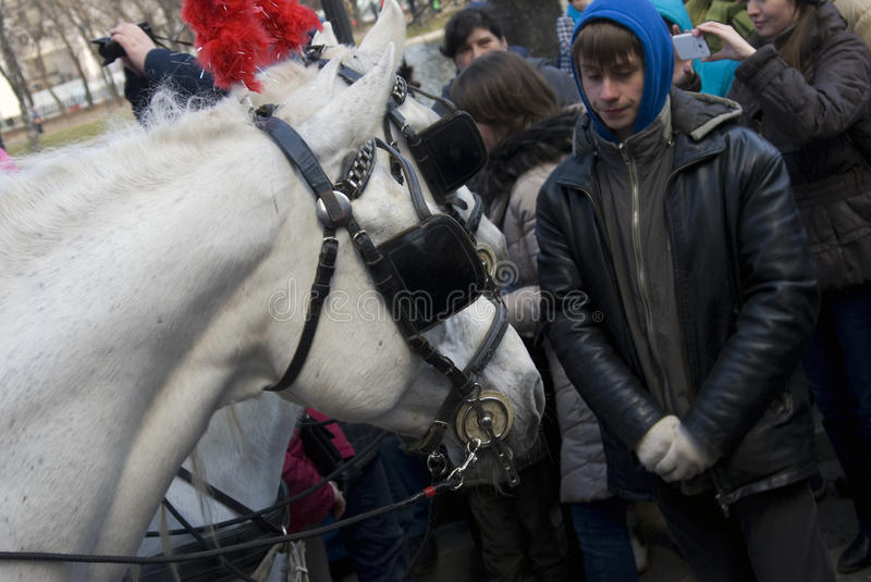 Download Horse Carriage At Moscow Tramway Parade - 2017 Editorial Photo - Image of mammals, 2017: 90715306