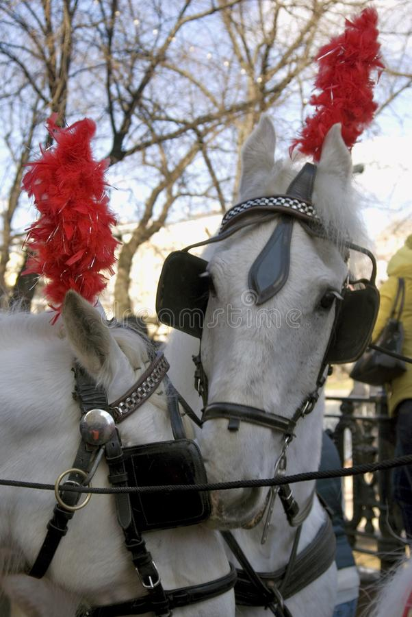 Download Horse Carriage At Moscow Tramway Parade - 2017 Editorial Image - Image of animal, public: 90715395
