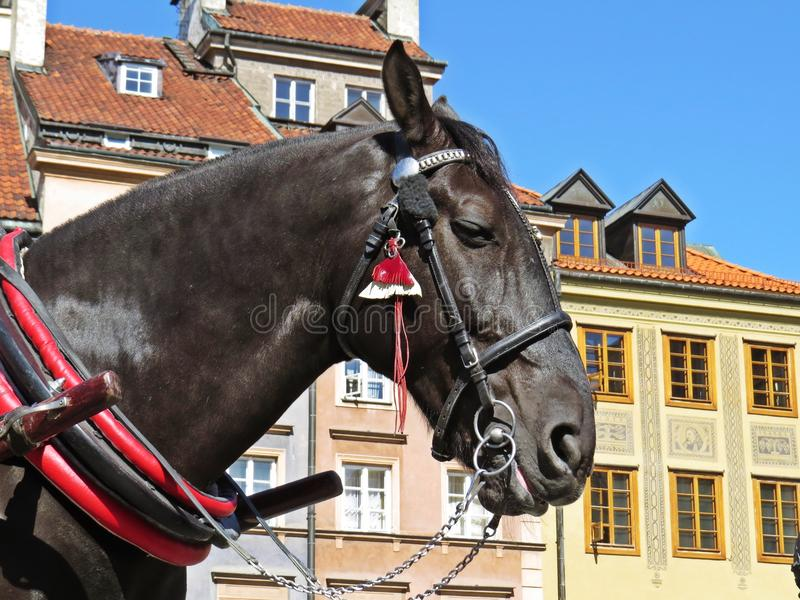 Horse in a Carriage at Old Town Market Square, Warsaw, Poland. Horse in a Carriage at the Old Town Market Square, Warsaw, Poland stock photos