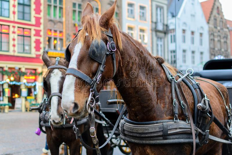 Horse with carriage ready to work in the central square of Bruges.  stock images