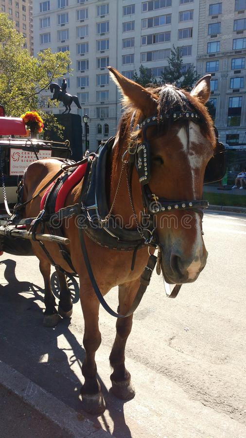 Horse and Carriage Rides in Central Park, NYC, NY, USA stock photography