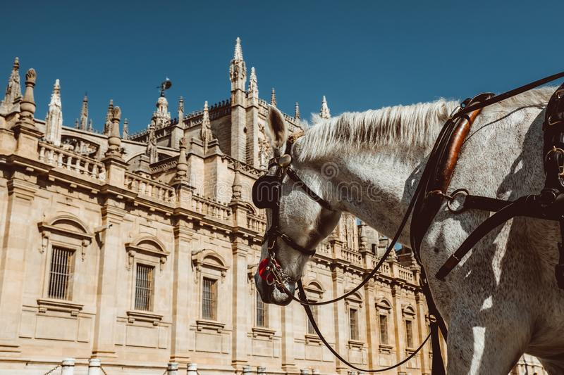 Horse carriage in Seville, the Giralda cathedral in the background, Andalusia, Spain stock photography