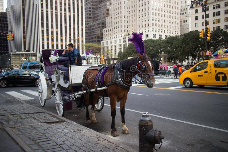 Horse and Carriage Waiting to Give a Ride in New York City stock photography