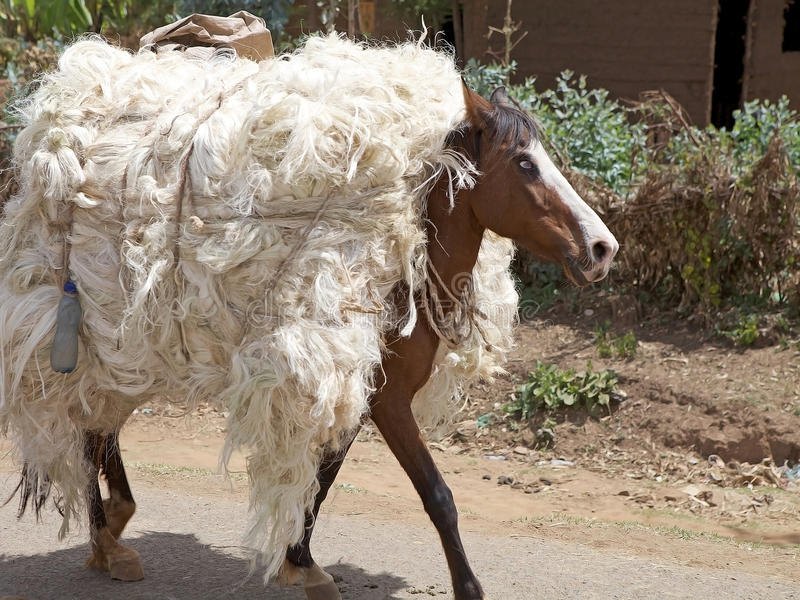 Download Horse stock photo. Image of cotton, culture, ethiopia - 31470938