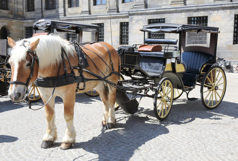 Download Horse and Cart stock image. Image of harness, horse, wheels - 25109473