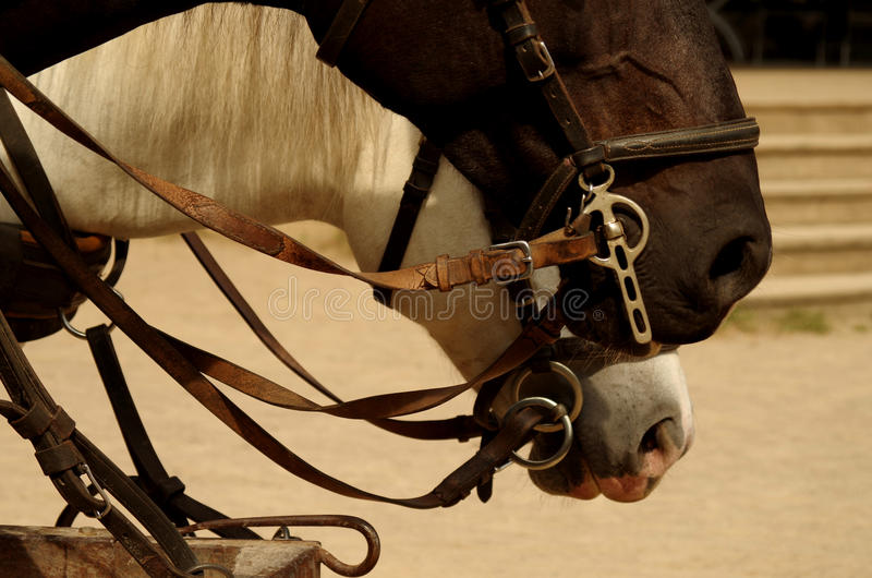 Horse and cart. In close up royalty free stock photos