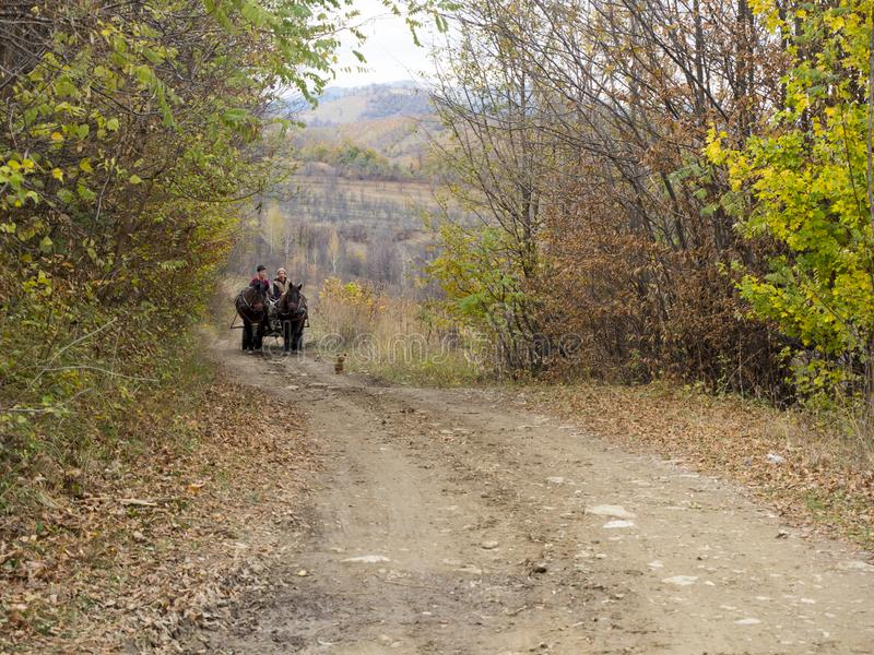Horse cart on a rural road royalty free stock photo