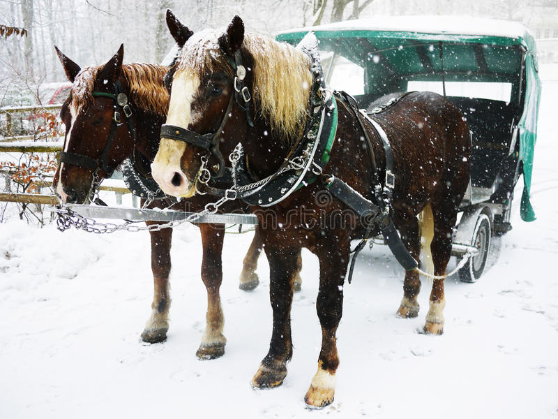 Horse Cart In The Snow Stock Photo