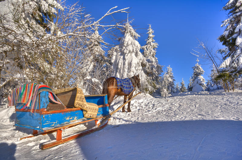 A horse and cart are in the snow-bound fir-trees stock photo