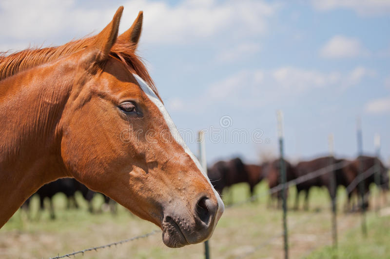 Horse and cattle stock image