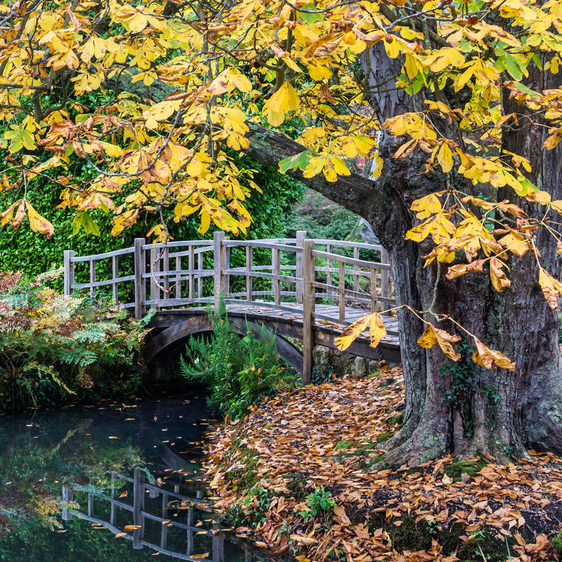 Download Horse Chestnut stock photo. Image of tree, chestnut, exbury - 27913088