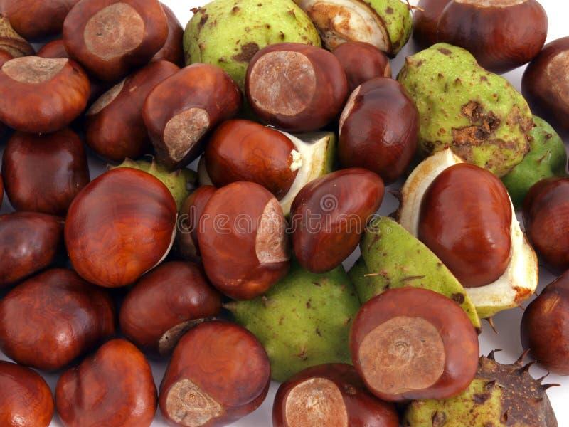 Horse chestnut, Conker. stock photo