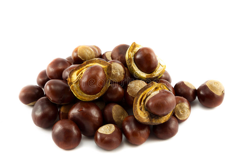 Horse chestnut. Mahogany brown Horse chestnuts or conkers royalty free stock photo