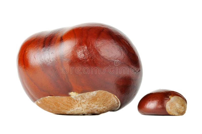 Download Horse Chestnuts stock image. Image of isolated, botanical - 23809041