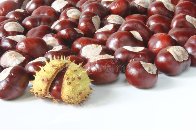 Download Horse chestnuts stock photo. Image of chestnuts, plants - 26841250