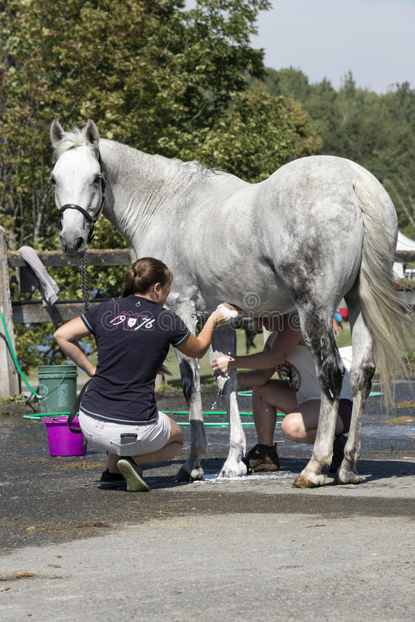 Horse cleaning. Picture of two young woman washing the horse after competition at the bromont concours June 12, 2016 royalty free stock photography