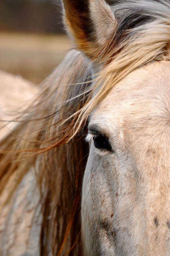 Free Horse Close Up Stock Photos - 19141413