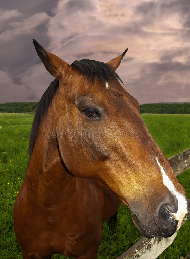 Download Horse close-up stock image. Image of lens, thoroughbred - 19875305