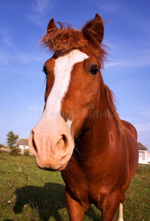 Download Horse close up stock photo. Image of horse, equestrian - 26800044