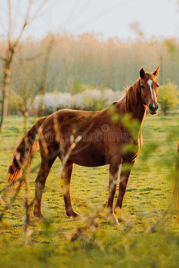 Horse close up portrait in motion on green meadow royalty free stock images