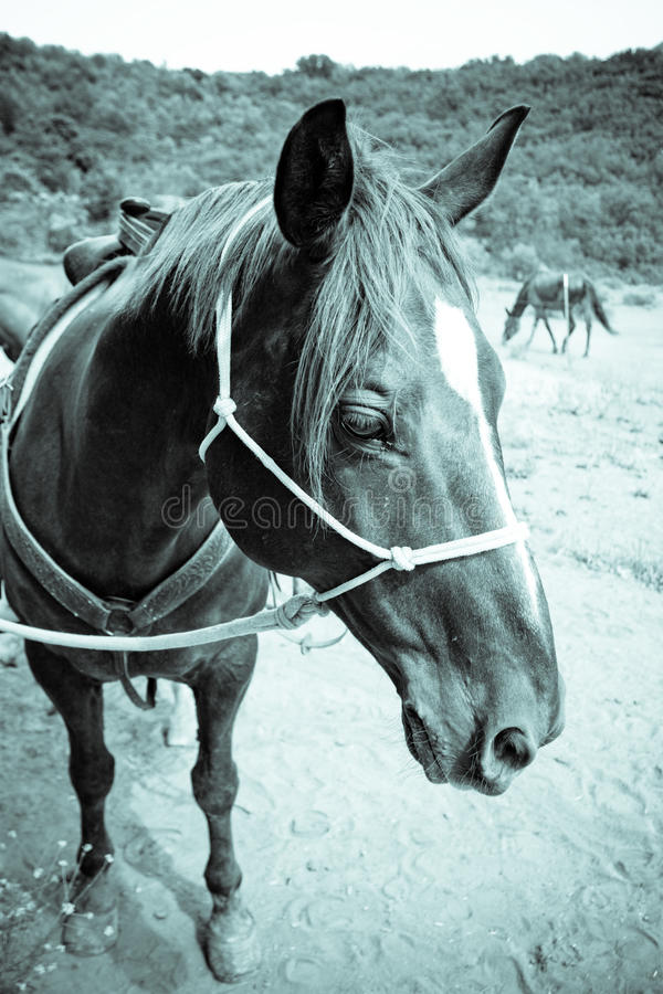 Download Horse closeup stock photo. Image of vertical, wide, black - 10028130