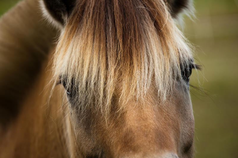 Download Horse closeup stock photo. Image of portrait, mane, green - 10603076