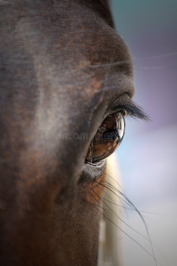 Download Horse closeup stock photo. Image of dark, light, farm - 19908524