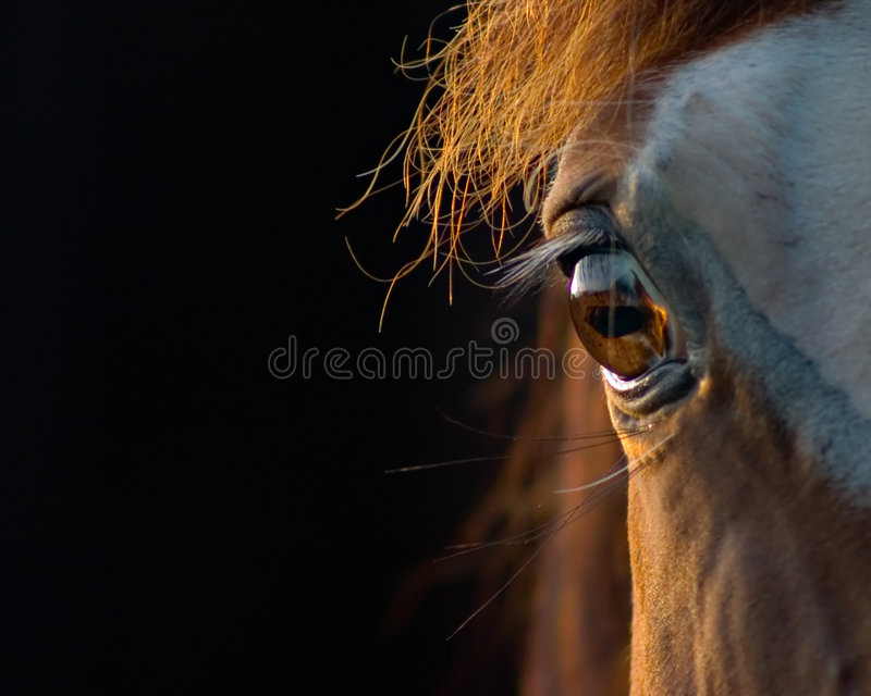 Horse closeup stock photography