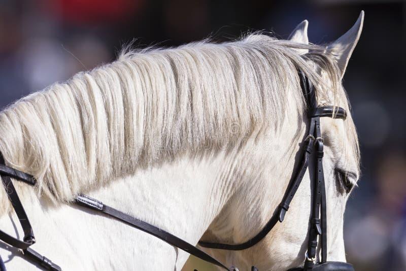 Horse Closeup Neck royalty free stock photo