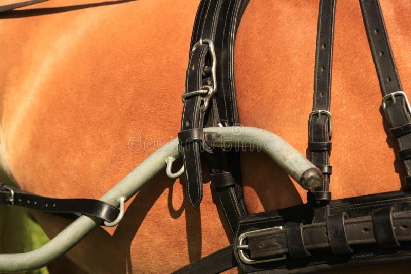 Horse collar - closeup. stock images